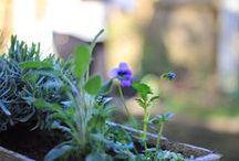 My little cottage garden