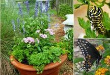Gardens for Butterflies and Bees / by Faith O'Connor