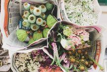 flowers & plants / by Gabby Bella / Gabby Lardizabal-Bray