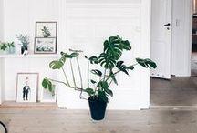 dress my nest / decor, plants, housewares, fixtures, etc.