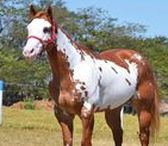 Nicely-colored horses / Horses aren't just browns, blacks and whites for me.