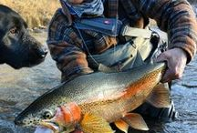 Durango Outdoor Sportsman and Wildlife / Durango offers plenty of outdoor sportsman activities, from horseback riding, camping, fly-fishing, hunting, backpacking, golfing, 4x4 Trails. Hire a fly fishing guide to take you fishing in Durango, Colorado