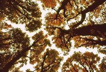 autumn / by Sandra Emilie