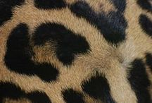 Leopard is my favorite color. / All things leopardy and must haves. #leopardismyfavoritecolor