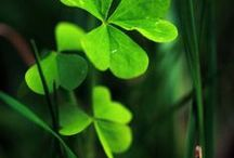 Happy St. Patrick's Day / A celebration of all things Irish and glorious green.