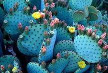 plants / by Aimée Wilder