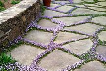 Lawns / Grass alternatives and garden lawns