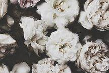 Botanicals / by Elena Kovyrzina