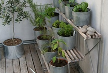 gardening / for our porch garden -- small space gardening in the city. / by Emily M