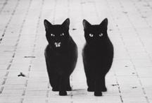 Bestiaire / Meow !