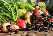 My Edible Garden / by Jill Bridgeman