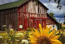 The Bridgeman Farmstead / by Jill Bridgeman