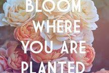 Flower Quotes / http://dabbiesgardenideas.com