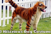 Hilarious Dog Costumes