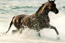 Horses / by Bryan Shephard