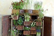 plants / by Bethany Bray