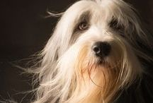 Dogs: Grooming & Style / Dogs