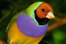 Birds / by Raisa Ress