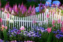 Garden: Beautiful gardens