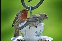 Garden: Birds in the garden