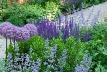 """Blue/Purple - Crown Jewels in the Garden / """"Wouldn't it be wonderful if you could describe your garden as a 'jewel box full of beautiful plant treasurers? It is entirely possible, and the smaller your outdoor space, the easier it is to be.""""  The Jewel Box Garden by Thomas Hobbs"""