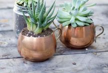 Green Thumb / Gardening  / by Melissa Myers