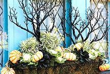 Fall ideas / by Susan Anderson