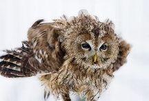 Hooters / Owls