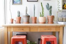 Plants for days / Indoor plants as home decor