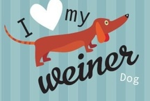 Dachshund Obsession / by Jennifer Thrash