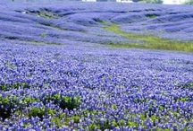Texas Born & Bred / by Karen Powell