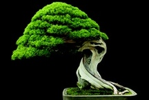 Bonsai trees & Topiary / Art of trimming plants or trees into decorative shapes; garden containing trees that are trimmed into fanciful shapes.   / by Eliyah Lugashi