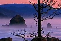 Pacific Northwest Bliss / by Teresa M