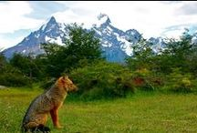 Wildlife / Animals from around the world / by Green Global Travel