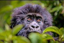 Wildlife Travel / Animals & Wildlife from around the world