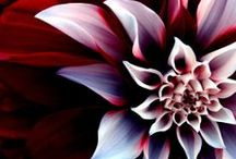 Flowers / by Danielle Brown