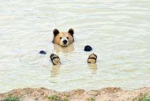 Favoriete dieren! / Hier vind je foto's van mijn eigen dieren en dierenfoto's die ik super lief of bijzonder vind!