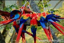 #EcoCostaRica / A group board for photos showcasing the gorgeous Nature & Wildlife of Costa Rica! / by Green Global Travel