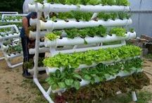 Aeroponics - Hydroponics / Aeroponics is the process of growing plants in an air or mist environment without the use of soil or an aggregate medium   Hydroponics is a subset of hydroculture and is a method of growing plants using mineral nutrient solutions, in water, without soil.