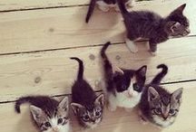 Kittens / This board of everything cats and kittens is in honor of my man who loves them more than anything.