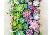 Succulent gardening / by Megan Gauthier