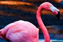 f l a m i n g o / pink: http://en.wikipedia.org/wiki/Flamingo