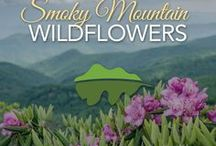Wildflowers / Check out our beautiful Springtime Wildflowers in the Smoky Mountains!
