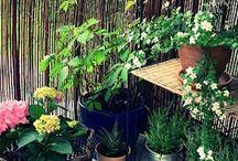 Garden Balkon Plant
