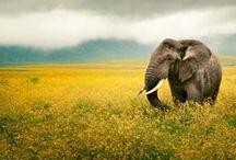 Elegant Elephants / Art and photography featuring Elephants