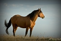 Wild Horses and Burros / There are MANY animal welfare boards on my page. Please look at all of them to narrow down what you are looking for and then share. You can make a difference. / by Desert Heart