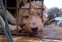 """Dog Meat, Fur, Wool, Feather, Civet and Leather Trade Issues / There are MANY animal welfare boards on my site. Please look at all of them to narrow down what you are looking for and then share. You can make a difference. This additional board """"Animal Stories"""" is for feel good stories and random articles about animals that I come across. / by Desert Heart"""