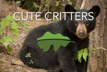 Cute Critters / Cute animals from the Smokies, and some from other places around the world.