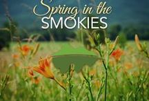 Spring Time in the Smokies