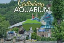 Ripley's Aquarium of the Smokies / This awesome aquarium is located in Gatlinburg, Tennessee. So many visitors and locals alike love this attraction. It is a must-see if you ask us!